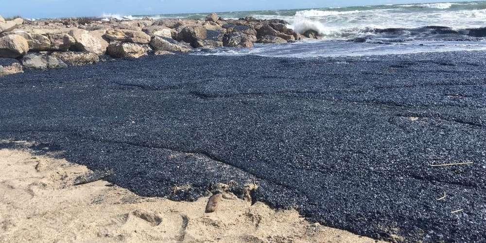 Vidéo. Des milliards de méduses violettes envahissent les plages de Palavas